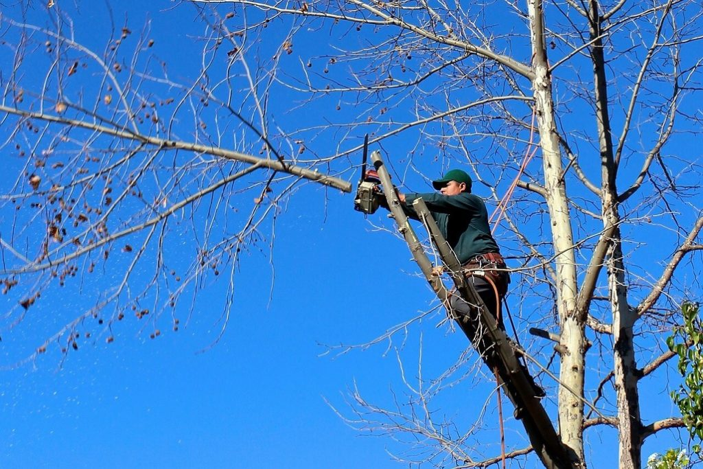 Contact Us-Greensboro Tree Trimming and Stump Grinding Services-We Offer Tree Trimming Services, Tree Removal, Tree Pruning, Tree Cutting, Residential and Commercial Tree Trimming Services, Storm Damage, Emergency Tree Removal, Land Clearing, Tree Companies, Tree Care Service, Stump Grinding, and we're the Best Tree Trimming Company Near You Guaranteed!
