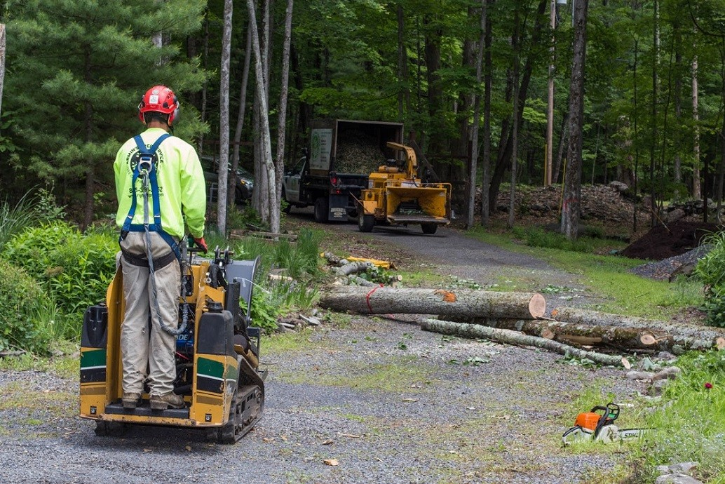 Emergency Tree Removal-Greensboro Tree Trimming and Stump Grinding Services-We Offer Tree Trimming Services, Tree Removal, Tree Pruning, Tree Cutting, Residential and Commercial Tree Trimming Services, Storm Damage, Emergency Tree Removal, Land Clearing, Tree Companies, Tree Care Service, Stump Grinding, and we're the Best Tree Trimming Company Near You Guaranteed!