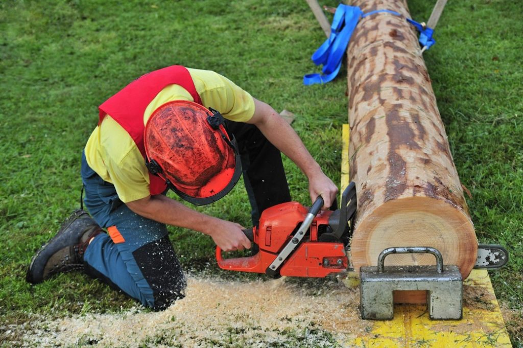 Greensboro Tree Trimming and Stump Grinding Services Header Image-We Offer Tree Trimming Services, Tree Removal, Tree Pruning, Tree Cutting, Residential and Commercial Tree Trimming Services, Storm Damage, Emergency Tree Removal, Land Clearing, Tree Companies, Tree Care Service, Stump Grinding, and we're the Best Tree Trimming Company Near You Guaranteed!