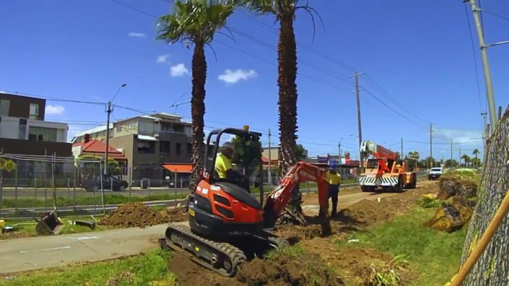Palm Tree Removal-Greensboro Tree Trimming and Stump Grinding Services-We Offer Tree Trimming Services, Tree Removal, Tree Pruning, Tree Cutting, Residential and Commercial Tree Trimming Services, Storm Damage, Emergency Tree Removal, Land Clearing, Tree Companies, Tree Care Service, Stump Grinding, and we're the Best Tree Trimming Company Near You Guaranteed!