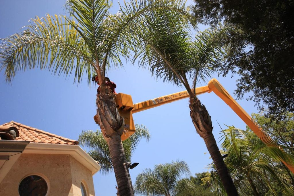 Palm Tree Trimming-Greensboro Tree Trimming and Stump Grinding Services-We Offer Tree Trimming Services, Tree Removal, Tree Pruning, Tree Cutting, Residential and Commercial Tree Trimming Services, Storm Damage, Emergency Tree Removal, Land Clearing, Tree Companies, Tree Care Service, Stump Grinding, and we're the Best Tree Trimming Company Near You Guaranteed!
