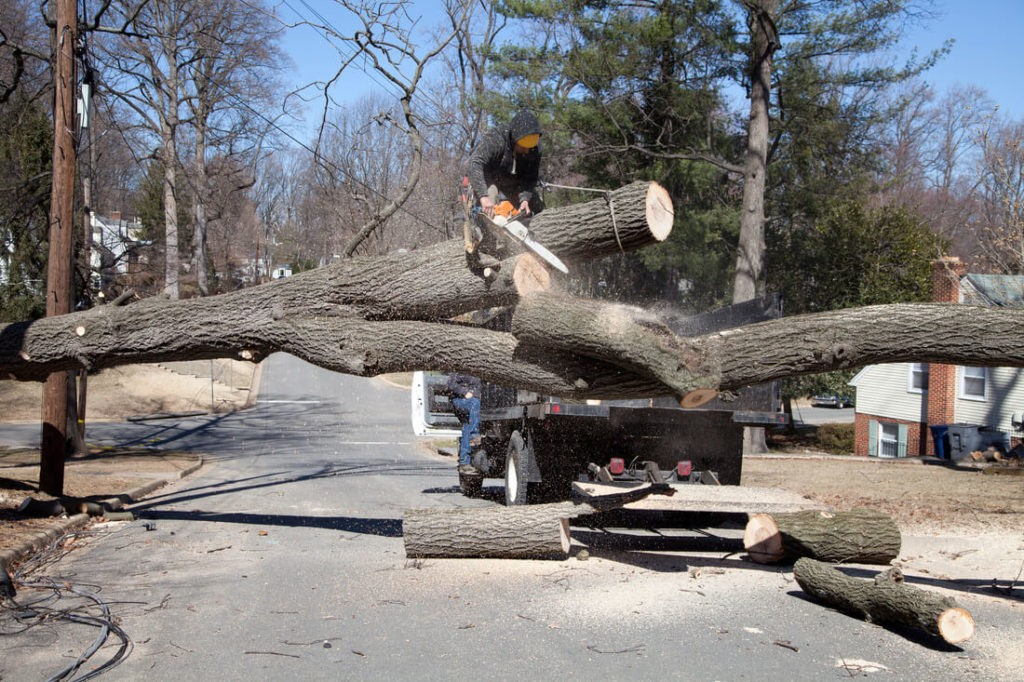 Residential Tree Services-Greensboro Tree Trimming and Stump Grinding Services-We Offer Tree Trimming Services, Tree Removal, Tree Pruning, Tree Cutting, Residential and Commercial Tree Trimming Services, Storm Damage, Emergency Tree Removal, Land Clearing, Tree Companies, Tree Care Service, Stump Grinding, and we're the Best Tree Trimming Company Near You Guaranteed!