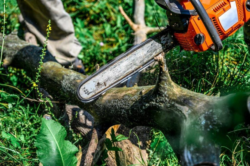 Services-Greensboro Tree Trimming and Stump Grinding Services-We Offer Tree Trimming Services, Tree Removal, Tree Pruning, Tree Cutting, Residential and Commercial Tree Trimming Services, Storm Damage, Emergency Tree Removal, Land Clearing, Tree Companies, Tree Care Service, Stump Grinding, and we're the Best Tree Trimming Company Near You Guaranteed!