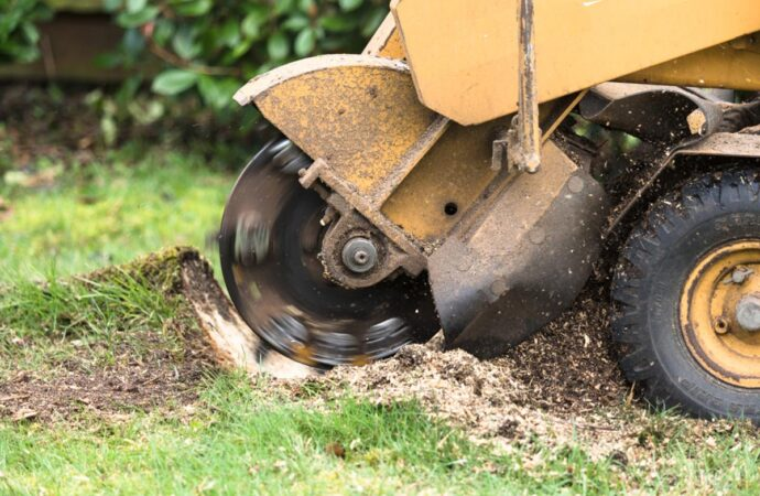 Stump Grinding-Greensboro Tree Trimming and Stump Grinding Services-We Offer Tree Trimming Services, Tree Removal, Tree Pruning, Tree Cutting, Residential and Commercial Tree Trimming Services, Storm Damage, Emergency Tree Removal, Land Clearing, Tree Companies, Tree Care Service, Stump Grinding, and we're the Best Tree Trimming Company Near You Guaranteed!