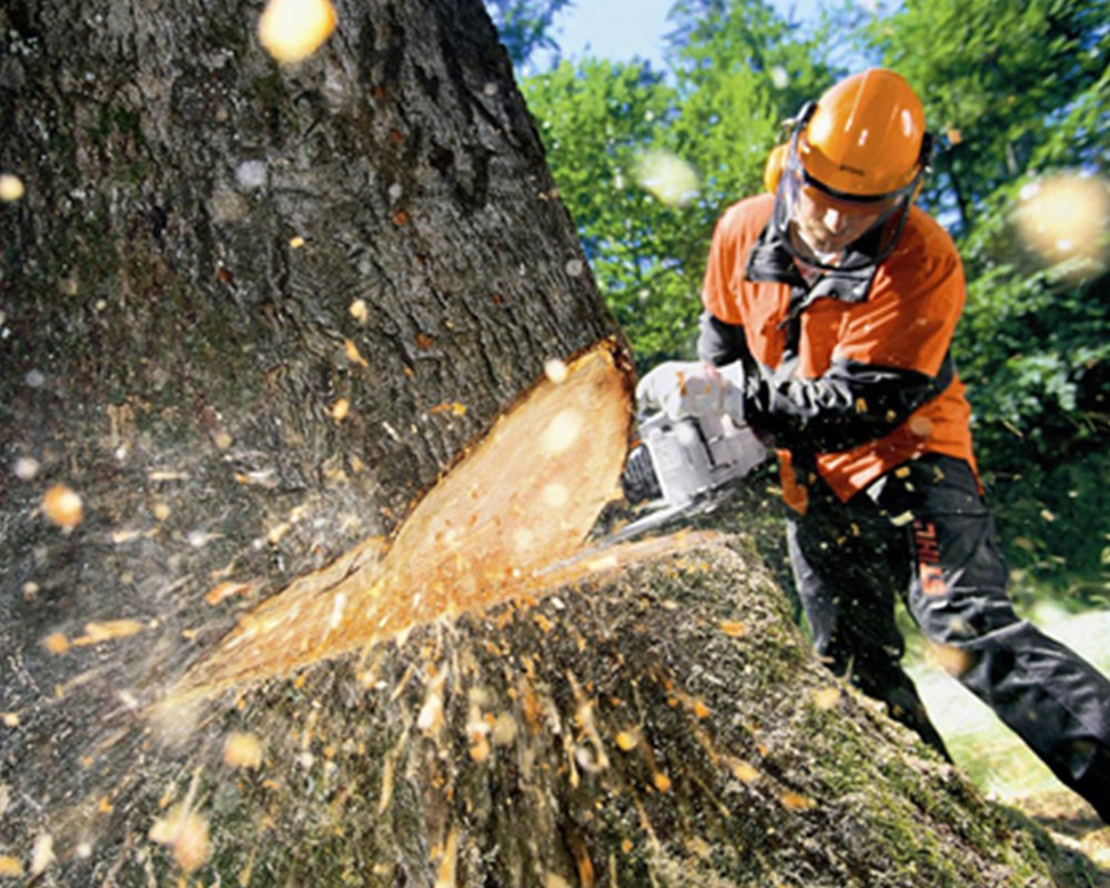 Tree Cutting-Greensboro Tree Trimming and Stump Grinding Services-We Offer Tree Trimming Services, Tree Removal, Tree Pruning, Tree Cutting, Residential and Commercial Tree Trimming Services, Storm Damage, Emergency Tree Removal, Land Clearing, Tree Companies, Tree Care Service, Stump Grinding, and we're the Best Tree Trimming Company Near You Guaranteed!