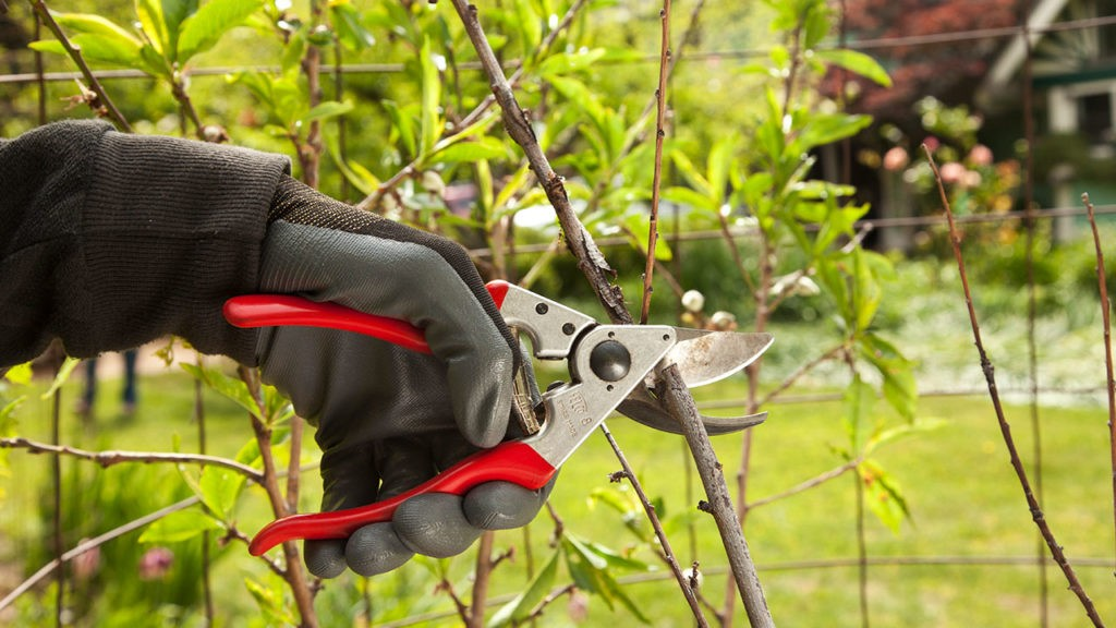 Tree Pruning-Greensboro Tree Trimming and Stump Grinding Services-We Offer Tree Trimming Services, Tree Removal, Tree Pruning, Tree Cutting, Residential and Commercial Tree Trimming Services, Storm Damage, Emergency Tree Removal, Land Clearing, Tree Companies, Tree Care Service, Stump Grinding, and we're the Best Tree Trimming Company Near You Guaranteed!
