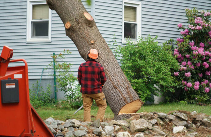 Tree Removal-Greensboro Tree Trimming and Stump Grinding Services-We Offer Tree Trimming Services, Tree Removal, Tree Pruning, Tree Cutting, Residential and Commercial Tree Trimming Services, Storm Damage, Emergency Tree Removal, Land Clearing, Tree Companies, Tree Care Service, Stump Grinding, and we're the Best Tree Trimming Company Near You Guaranteed!