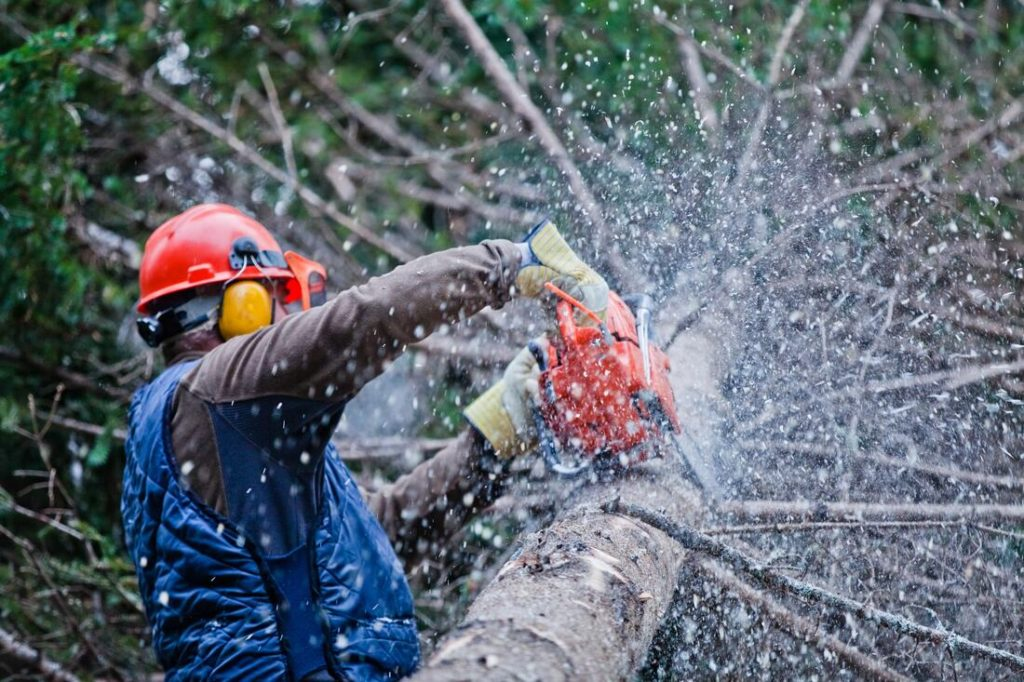 Burlington-Greensboro Tree Trimming and Stump Grinding Services-We Offer Tree Trimming Services, Tree Removal, Tree Pruning, Tree Cutting, Residential and Commercial Tree Trimming Services, Storm Damage, Emergency Tree Removal, Land Clearing, Tree Companies, Tree Care Service, Stump Grinding, and we're the Best Tree Trimming Company Near You Guaranteed!