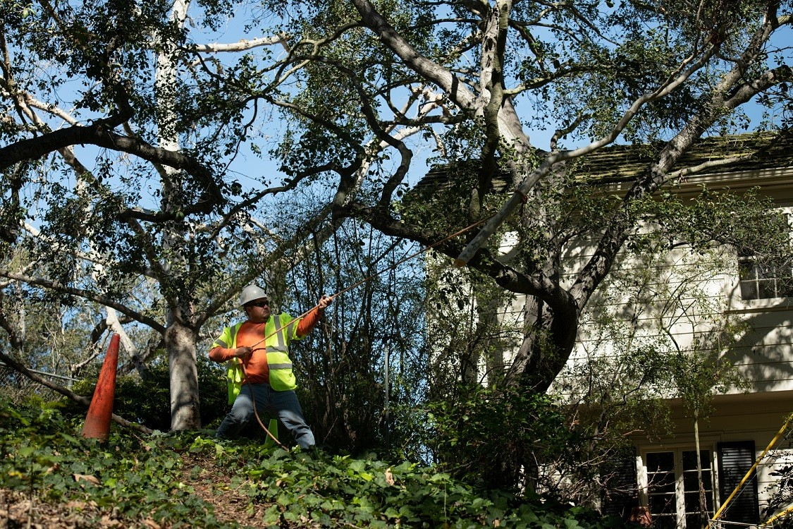 High Point-Greensboro Tree Trimming and Stump Grinding Services-We Offer Tree Trimming Services, Tree Removal, Tree Pruning, Tree Cutting, Residential and Commercial Tree Trimming Services, Storm Damage, Emergency Tree Removal, Land Clearing, Tree Companies, Tree Care Service, Stump Grinding, and we're the Best Tree Trimming Company Near You Guaranteed!